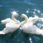 """Weekly Twin Flame Energy Forecast 11th-17th January: """"Love as Freedom"""""""